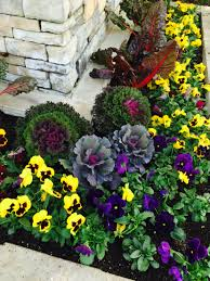 ooooo pretty myers plants u0026 pottery has their winter cabbages in