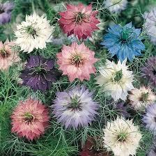 185 best flowers we grow images on pinterest cut flowers flower
