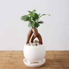 plante verte chambre à coucher plantes vertes intérieur faciles à entretenir sélection de 20