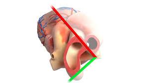 Anatomy Of Human Body Pdf 3d Pdf And Webgl