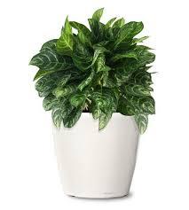 best 25 buy indoor plants ideas on indoor