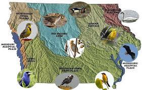 Iowa birds images Birds of iowa jpg