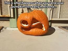 Pumpkin Carving Meme - arizona pumpkin halloween know your meme