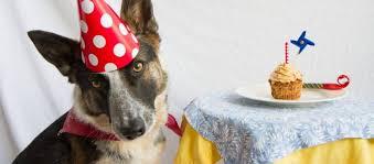 dog birthday cake your dog a birthday cake news daily