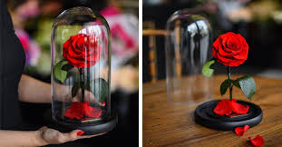 rose in glass real enchanted rose lasts 3 years without water or sunlight