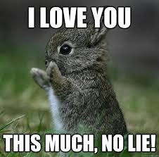 Birthday Love Meme - i love you this much no lie funny love meme picture ilove messages