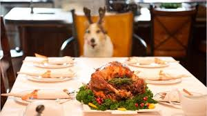 thanksgiving for dogs foods that may be dangerous for your pets