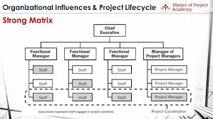 functional managers organizational structure 3 common types of organization structure in