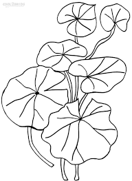 printable lily pad coloring pages for kids cool2bkids