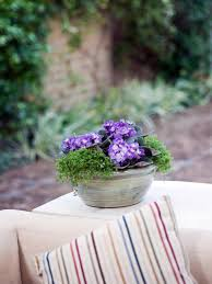 Winter Indoor Garden - winter flowers for indoor gardens hgtv