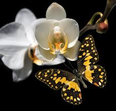 white orchid and butterfly stock image image 19434491