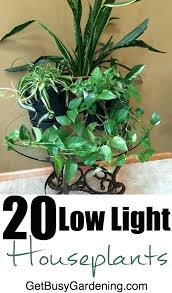low light houseplants new low light houseplants for sale and indoor house plants sale