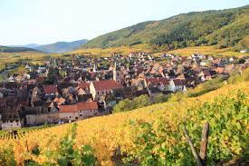 alsace cycling holiday vineyards and villages