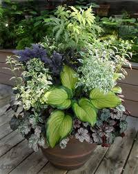 shade container gardening ideas great combo for shade container
