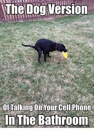Dog On Phone Meme - the dog version of talking on yourcell phone in the bathroom meme