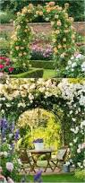 20 favorite flowering vines for the fence and arbor page 3 of 3