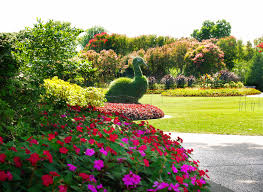 South Texas Botanical Gardens by 33 Best Peacock Topiaries Images On Pinterest Topiaries Peacock