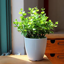 plant for home decoration fake plants for living room gallery including interior design with