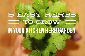 kitchen herbs 5 easy herbs to grow in your kitchen herb garden the upcycled family