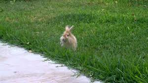bunny running and playing in the yard youtube