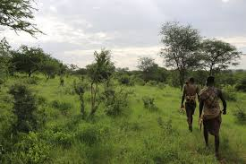 gut microbes found in gatherers shift with the seasons