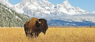 home canadian rangeland bison u0026 elk