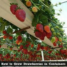 Vegetable Gardening In Pots by The 35 Easiest Container And Pot Friendly Fruits Vegetables And