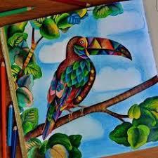 Coloring Ideas Owl In Flight Millie Morotta Coloring Book Ideas Owl Coloring Ideas