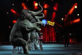 ringling brothers circus elephants retire to reserve the