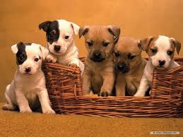 Wallpaper Dogs Cute Dogs And Puppies Wallpaper Puppie Wallpapers High Resolution