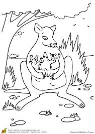 coloriage bonne fete maman kangourou sur hugolescargot com