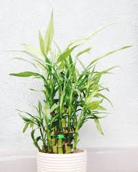 best plant for desk the best office plants plants that will thrive on your desk