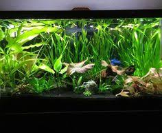 Aquascapes Of Ct Favourites Betta Tank By Jowee Encina Nice Little Tank For A