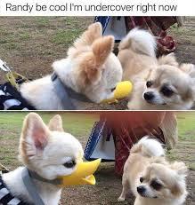Puppy Face Meme - the cute duck face cutedogs boopthesnoot cuddle fluffy