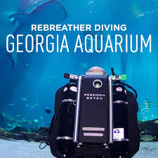 Diving in the georgia aquarium with whale sharks local adventurer