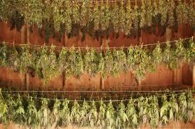 médecine en herbes