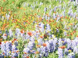 houston flowers flowers near ft sam houston and army center