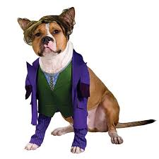 Big Dog Halloween Costume 43 Dog Cute Images Animals Adorable
