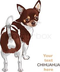 vector sketch dog chihuahua breed smiling stock vector colourbox