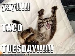 Taco Tuesday Meme - happy taco tuesday everyone steemit