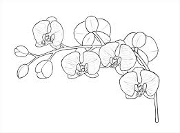 draw flowers sultry orchid