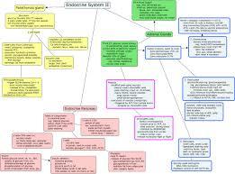 endocrine system concept map endocrine system ii cmap rid 1196496959516 1190485133 24759 partname htmljpeg