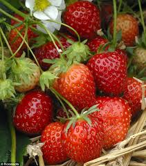 mail order fruit nigel colborn s essential for your garden this week daily