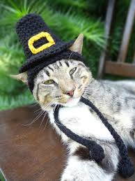 pilgrim cat hat pilgrim cat costume the pilgrim s