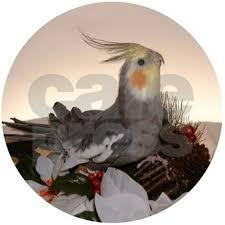 normal grey cockatiel ornament by aviary