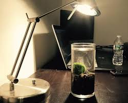 should you have a moss ball terrarium in your office u2013 moss ball