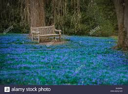 empty park bench in blue field of flowers spring time stock photo