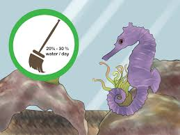 how to care for a seahorse 15 steps with pictures wikihow