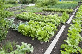 vegetables for zone 5 gardens tips on growing vegetables in zone 5