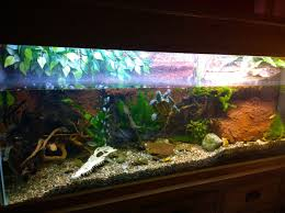 Terrarium Coffee Table by Fish Tank Diy Coffee Table Fish Tank Spectacular Free Guide And